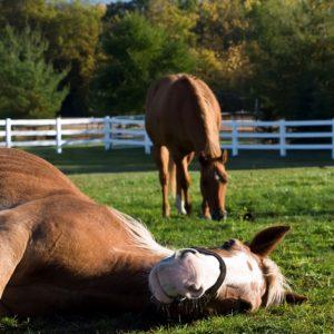 At Ürünleri