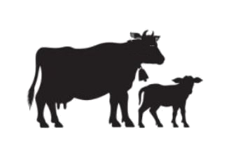 Hayvan refah ve konforu için dünya standartlarında ürünleri büyük ve küçükbaş hayvan yetiştiricilerine doğru ürünü ve alternatiflerini sunuyoruz.